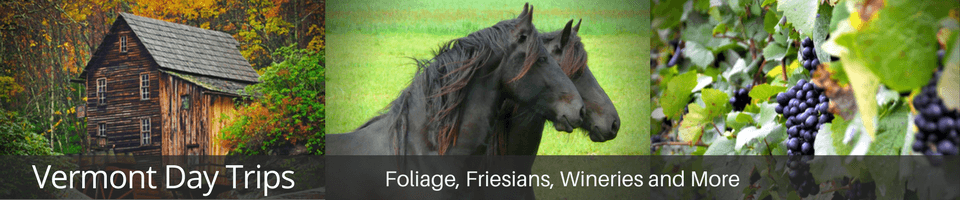 friesians, winery, foliage, covered bridge